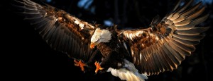 cropped-cropped-cropped-Animals___Birds____Eagle_attacks_prey_071315_-1.jpg