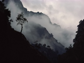 Туман-в-горах