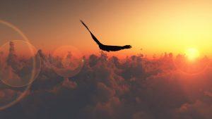 orel-nad-oblakami